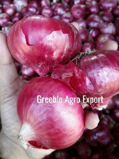 Fresh Crop Double Patti Red & Pink Onion |Export Quality