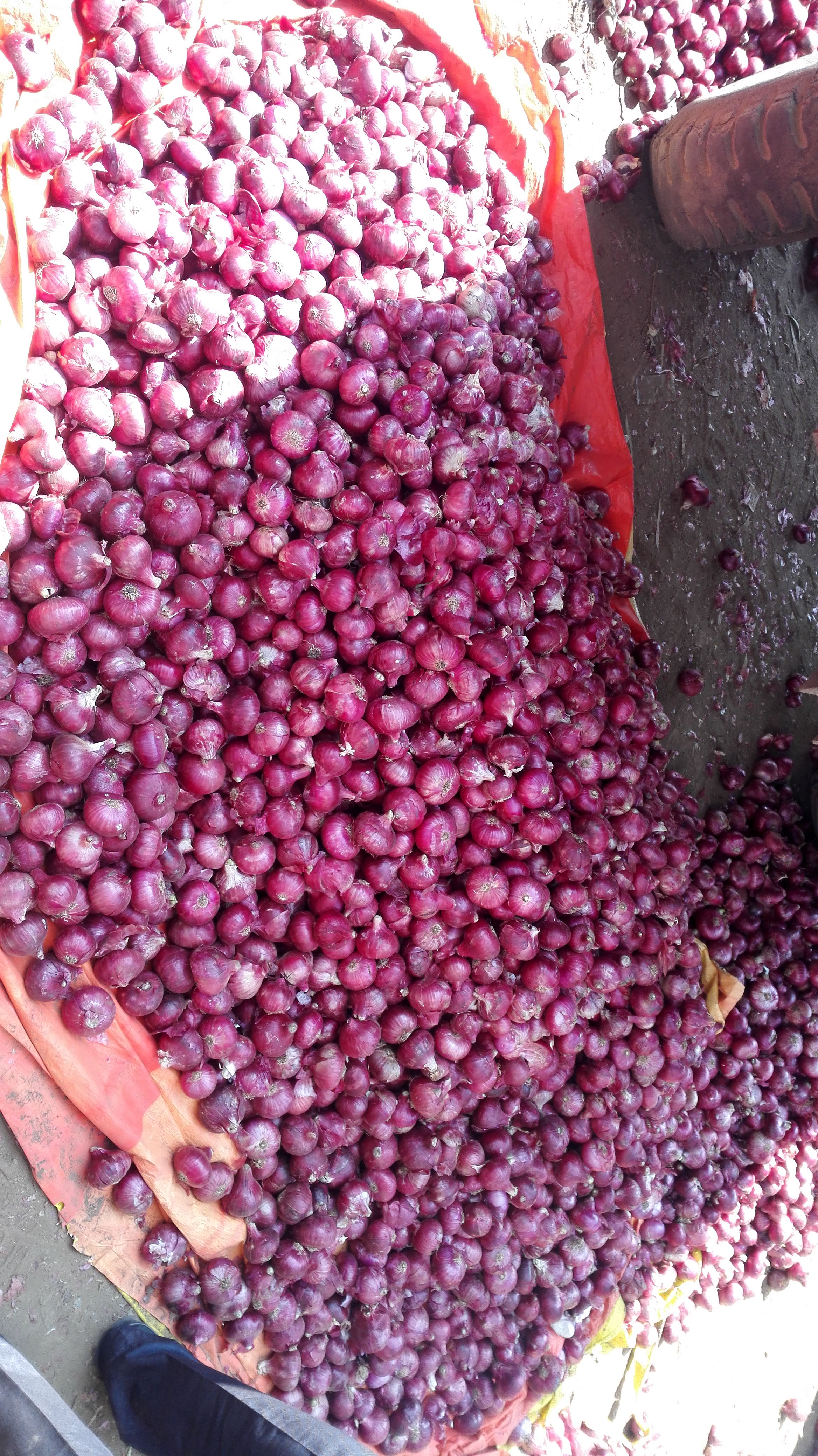 C Grade Red and Pink Onion Export Quality Red Onion